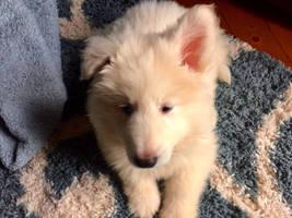 ~New Puppy~
