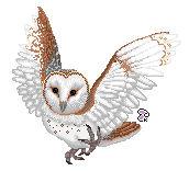 Barn Owl pixel