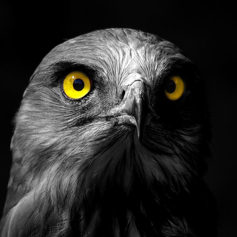 Eyes by SzandorDuBois