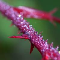 Dew Spines by SzandorDuBois