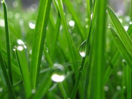 dew drops 2 by glarbinator