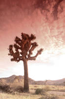joshua tree 2 by glarbinator