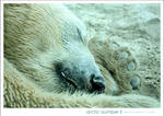 Arctic Slumber 2