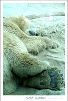 Arctic Slumber by glarbinator