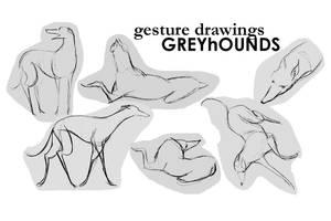 Greyhound Gesture Drawings
