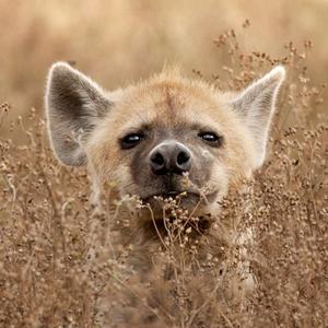 Felix-Wolf's Profile Picture