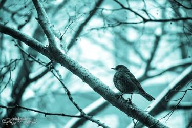 solitary. by Wintertale-eu