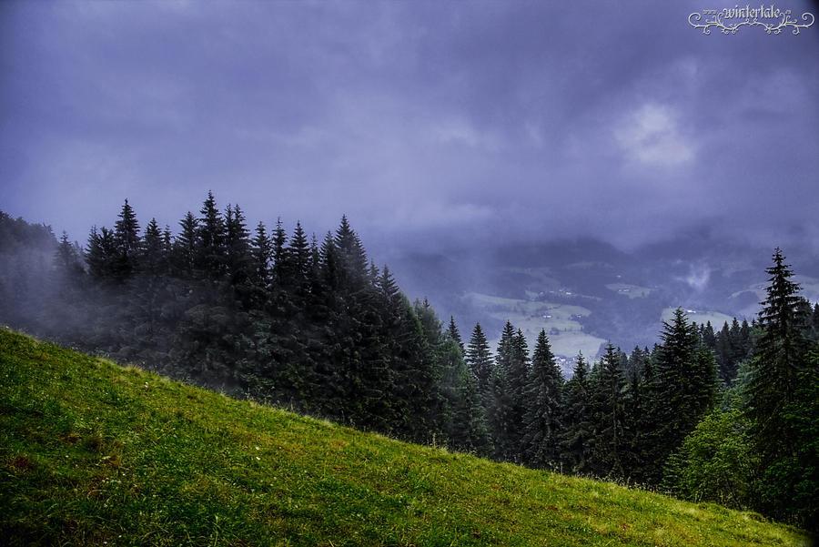 wild corner by Wintertale-eu