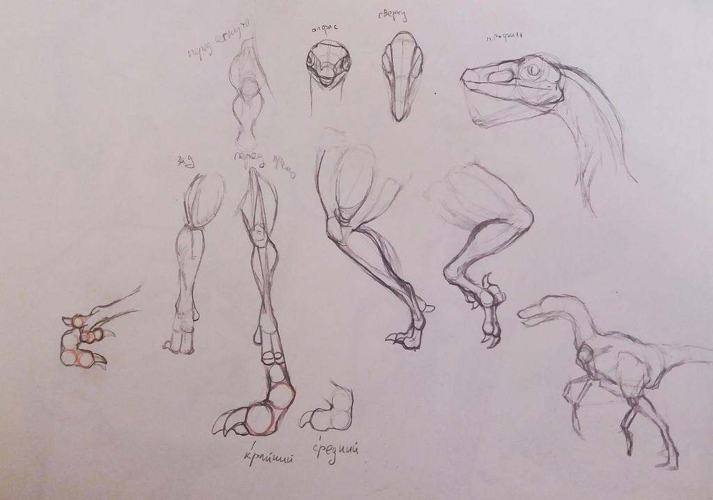 Study 6 by Oggyli