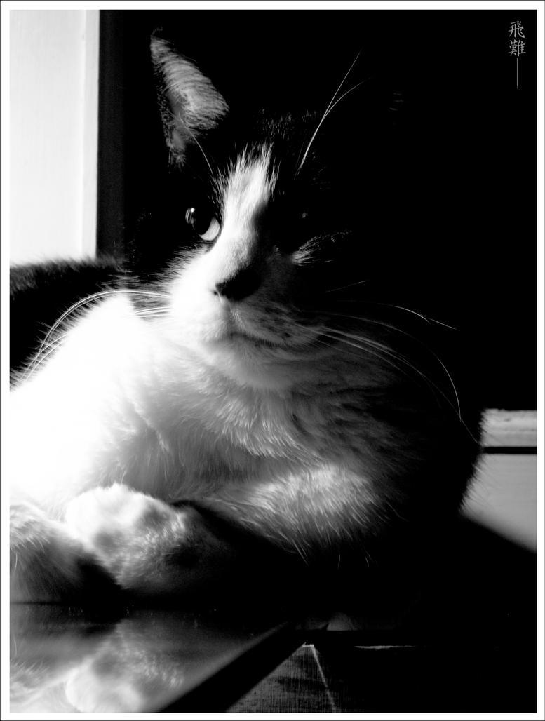 The sky is my limit... (FERMER) venez me rejoindre sur mon nouvelle atelier Tears of my heart!!!! Cat_on_the_desk_by_talline_occrerou
