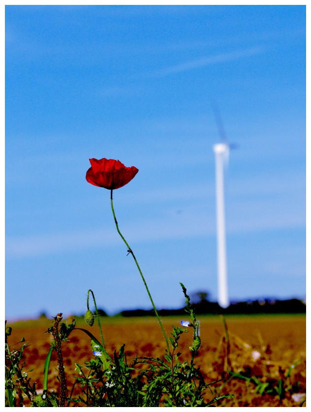 The Flower And The Windmil by JeanFrancois