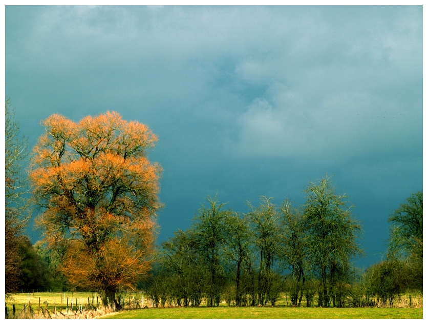 Blue Red And Green by JeanFrancois