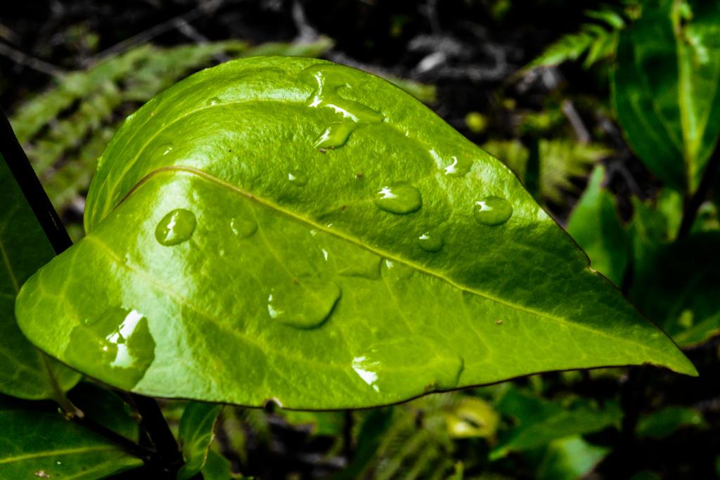 Verde naturaleza by soul4rusty