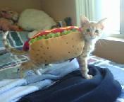 lucky hot dog by DragonNaga