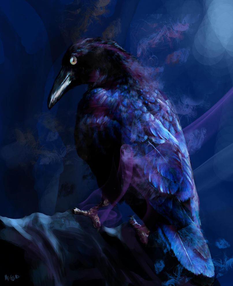 Raven ... by mapache87