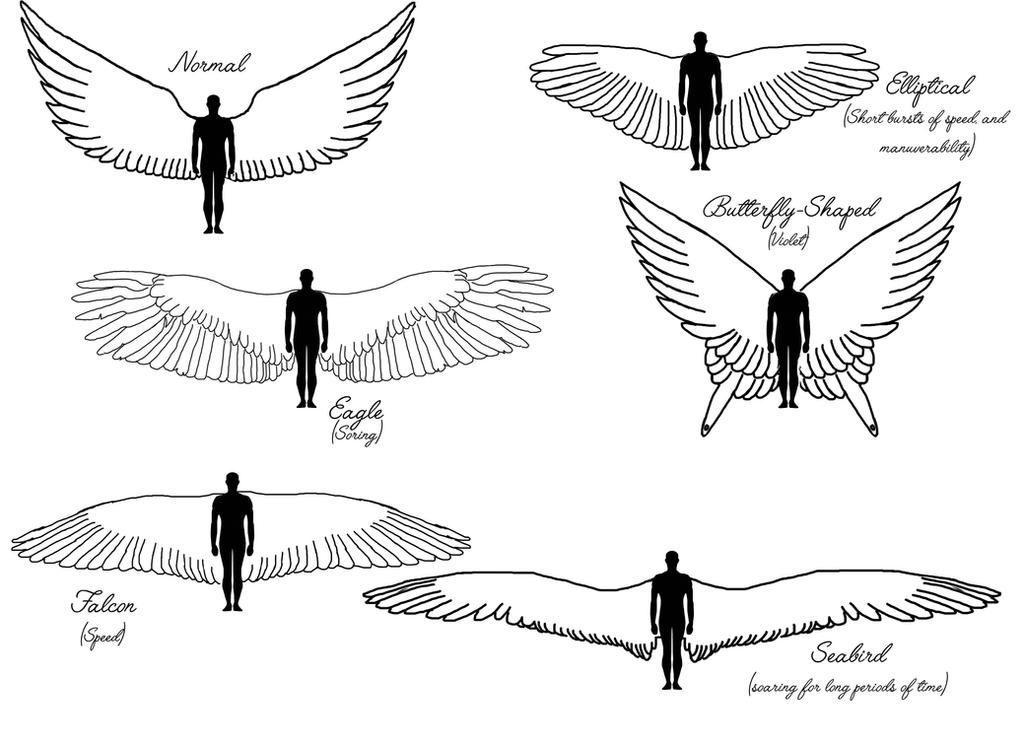 Character Design With Basic Shapes : Demi angel character design wing shapes by nyxshadowhawk