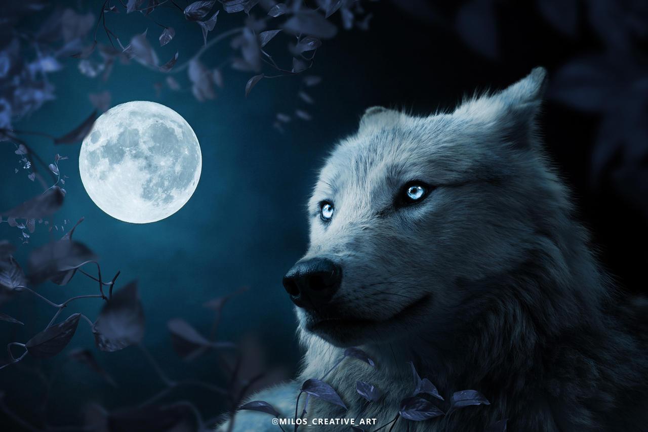 Wolf in Beautiful Night
