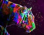 Colored Tiger by MilosCreativeArt