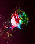 Red Rose by MilosCreativeArt