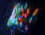 Blue Rose by MilosCreativeArt