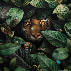 Tiger in Leaves
