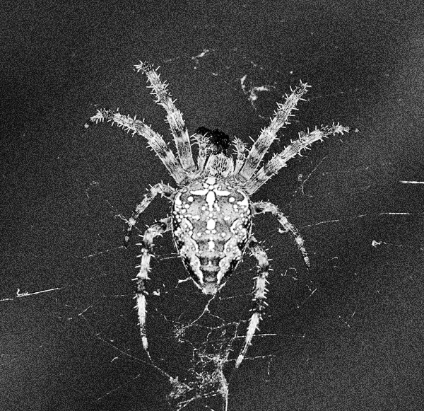 Spider 5464 by filmwaster