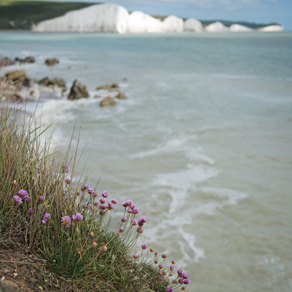 Cliff flowers 1094 by filmwaster