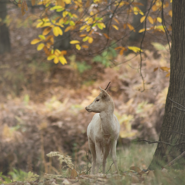 Unicorn 4584 by filmwaster