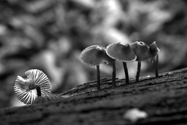 Fungi 4753 by filmwaster
