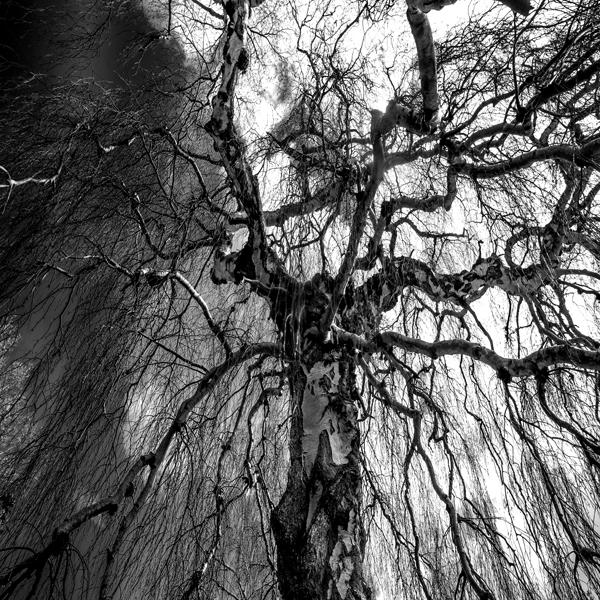 Birch 9228 by filmwaster