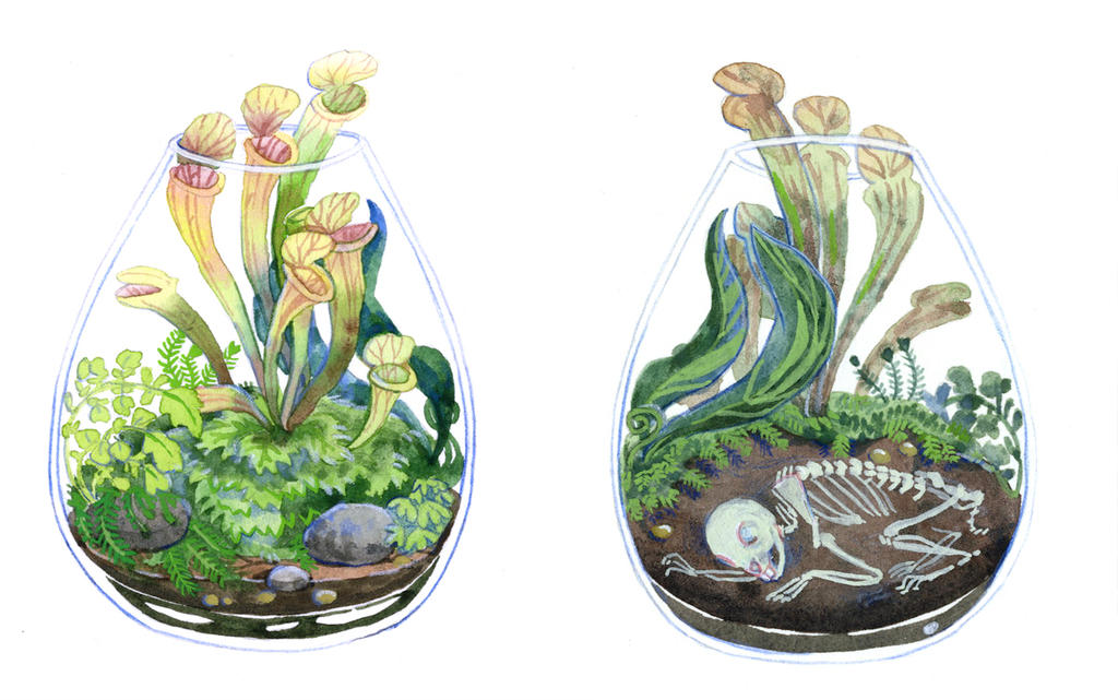 Rabbit Terrarium