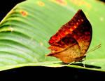 Fire on a leaf by eyenoticed