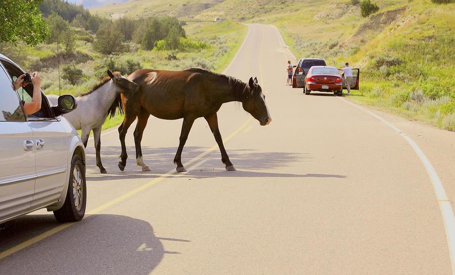 Wild horse crossing by eyenoticed