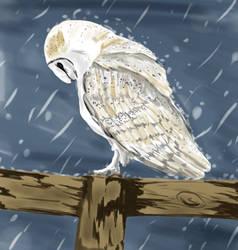 Little owl by whoareyouintheballad