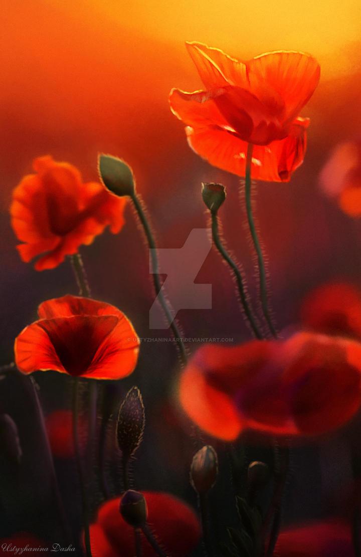 Poppies by UstyzhaninaART