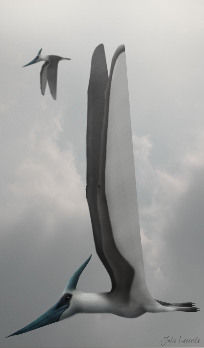 pteranodon_longiceps_by_karkajou1993-d4hwhjd.png