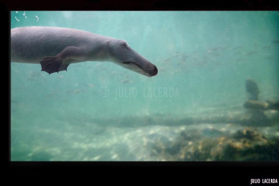 The Aquarium #6 by Julio-Lacerda