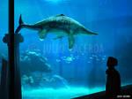 The Aquarium #14