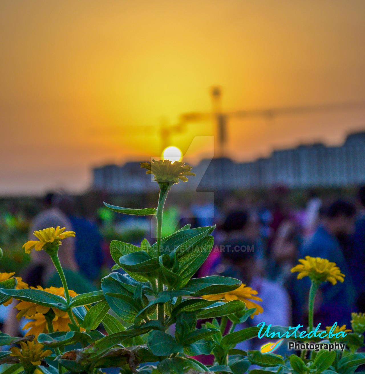 Sun on flower by unitedcba