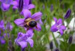 Working Bee