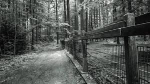 Come take a walk with me...
