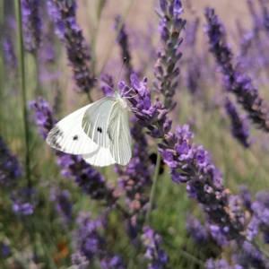 Butterfly feeling...