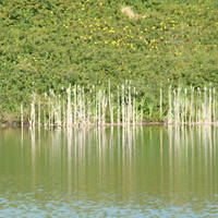 Reed Bed by MoonlitRain011