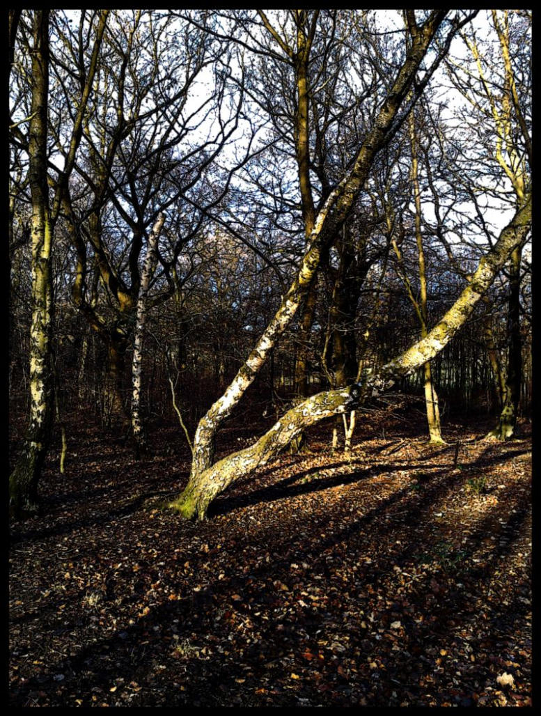 Strange Tree Formation by Spe4un