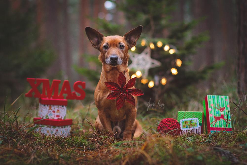 Merry Christmas by Hadissima