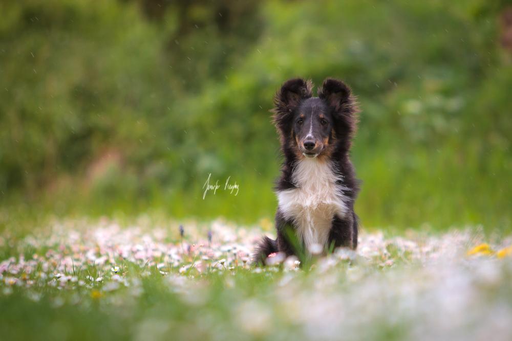 Flower Girl by Hadissima