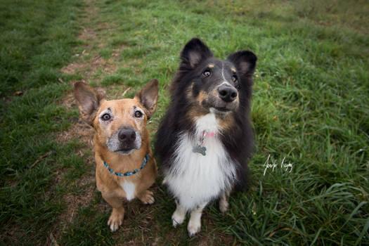 Toby and Zelda