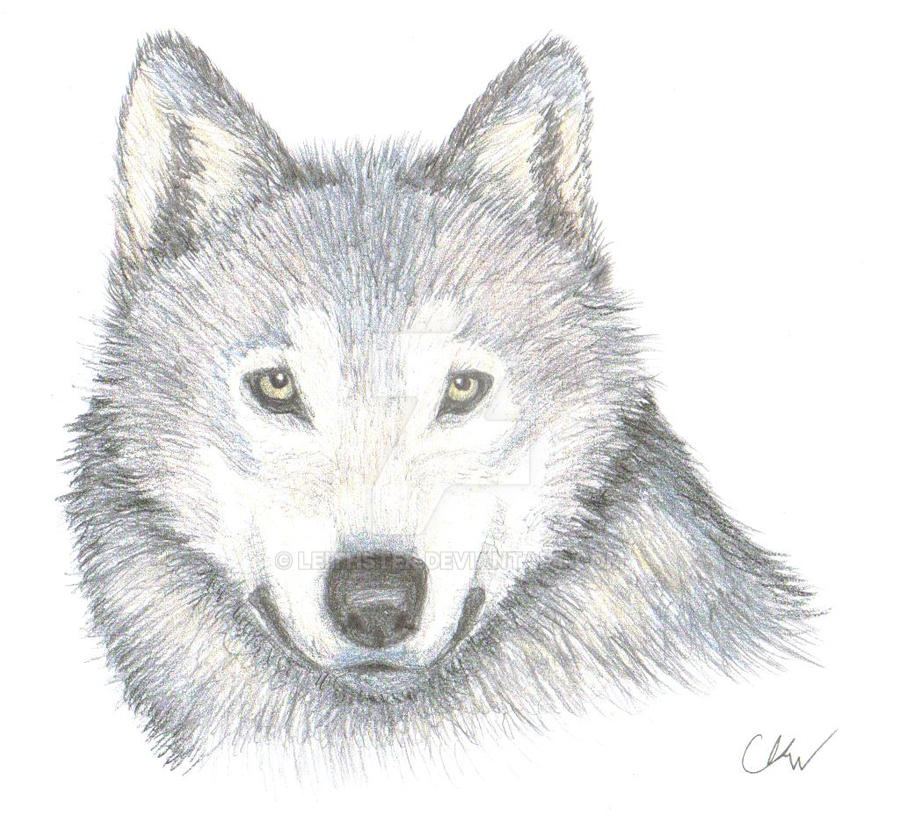 Wolf face by leithster