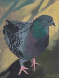 A Very Fabulous Pigeon by PlaviGmaz