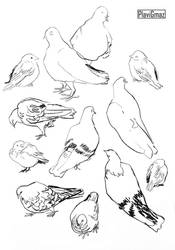 Pigeon sketches, with a few sparrows! by PlaviGmaz